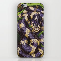 California Kingsnake iPhone & iPod Skin