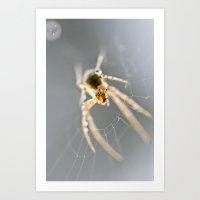 Little Spider Art Print