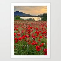 Field Of Poppies In The … Art Print