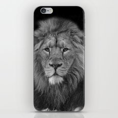 Asiatic Lion iPhone & iPod Skin