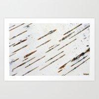 Birch-bark Art Print
