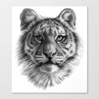 Tiger Cub SK106 Canvas Print