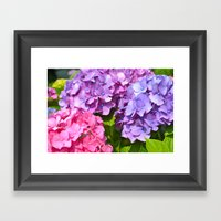 Cape Hydrangeas Framed Art Print