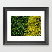 Evergreen  Framed Art Print