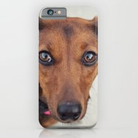 Doxie Dares You  iPhone 6 Slim Case
