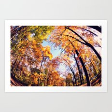 Fisheye Fall  Art Print