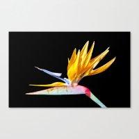 Bird Of Paradise Flower Canvas Print