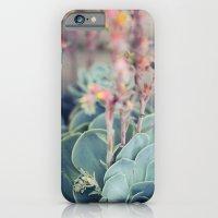Echeveria #4 iPhone 6 Slim Case