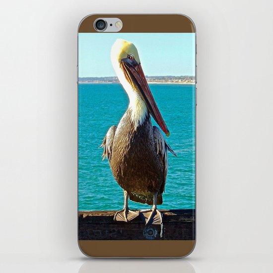 Portrait of a Perky Pelican iPhone & iPod Skin