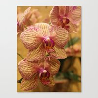 Orchids III Canvas Print