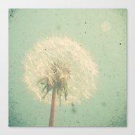 Dandelion Clock Canvas Print