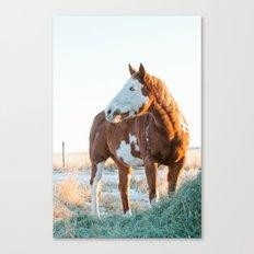 Pferd Canvas Print