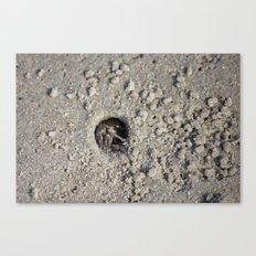 Peek-a-boo Crab Canvas Print