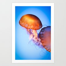Large Jellyfish Art Print