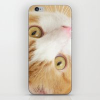 Orange The Cat iPhone & iPod Skin