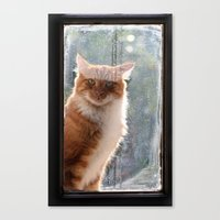 Ginger Cat  waiting by the window  (CW004) Canvas Print