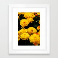 Golden Dew Drops II. Framed Art Print