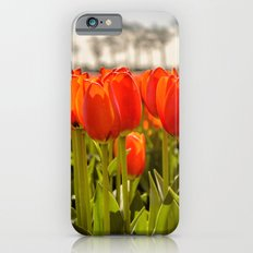 Tulips standing tall iPhone 6 Slim Case