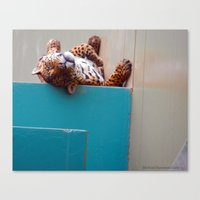 Reclining Jaguar Canvas Print