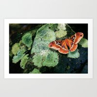 Moth On Rock Art Print