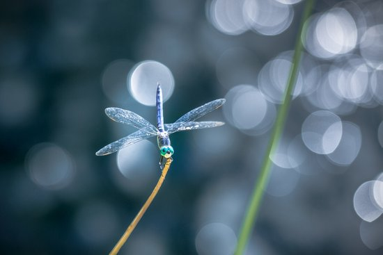 Air bokeh dragonfly Art Print