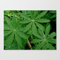 Water droplets on plants Canvas Print