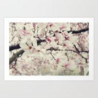 Magnolia. Art Print