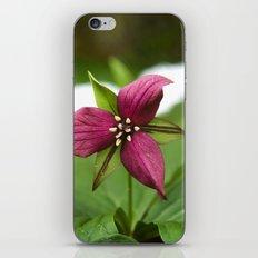 Red Trillium Flower iPhone & iPod Skin