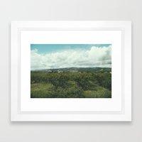 Vineyards, South of France Framed Art Print