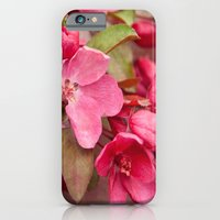 iPhone & iPod Case featuring Vintage Crabapple by Tara Steffen Fotos
