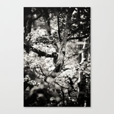 silver spring monkey Canvas Print