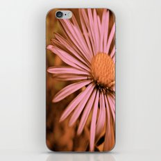 Pink as a Petal iPhone & iPod Skin