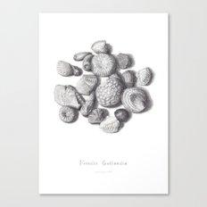Fossils Canvas Print