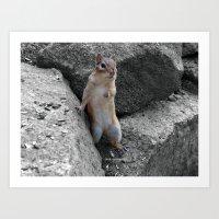 Standing Chipmunk Art Print