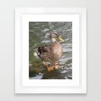 Duck Framed Art Print
