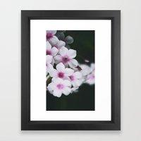 Summertime Phlox Framed Art Print