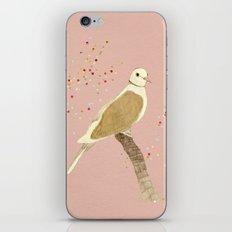 Streptopelia decaocto iPhone & iPod Skin