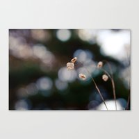Field of Forgotten Dreams Canvas Print