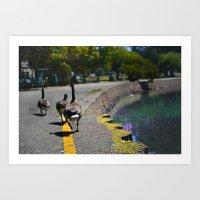 Lake Merrit Geese Art Print