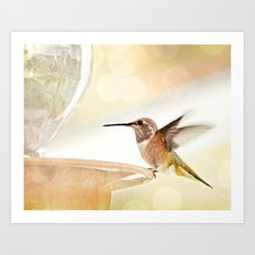 Hummingbird in flight Art Print