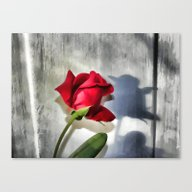 Canvas Print featuring Red Rose Bud Shadow by Judy Palkimas