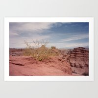 Cafayate Tree Art Print