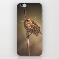Red-winged Blackbird iPhone & iPod Skin