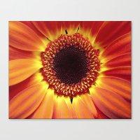 Harvest Sunflower Canvas Print