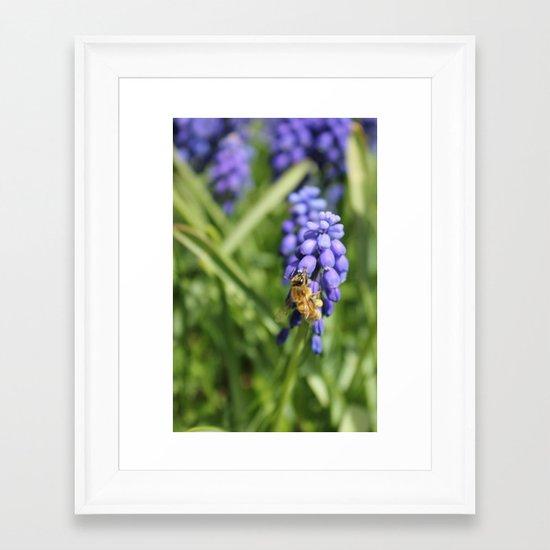 Sweet Hyacinth Framed Art Print