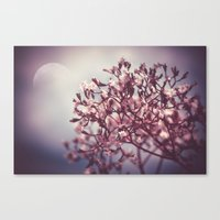 Tender Lights Canvas Print