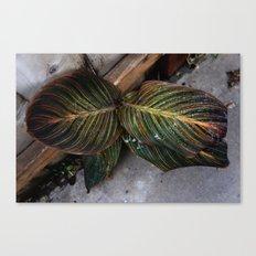 Moody Leaf Canvas Print