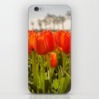 Tulips standing tall iPhone & iPod Skin