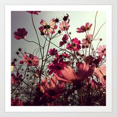 FLOWER 012 Art Print