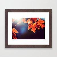 Maple Morning Framed Art Print